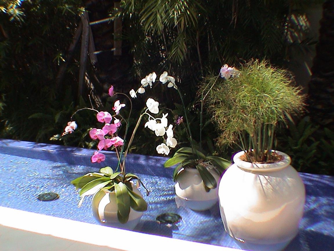 Garden-in-Pool-of-Water